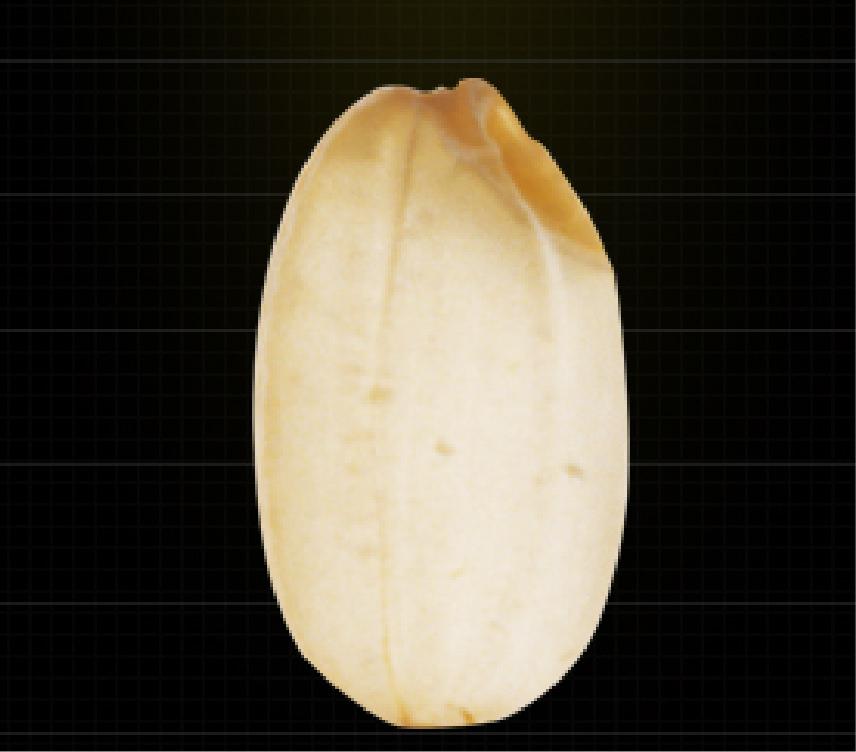 食用米 コシヒカリ